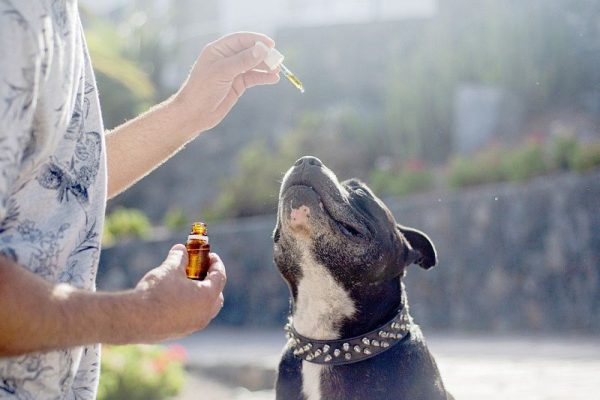 What Dog Owners Need To Know About CBD Oil For Dogs