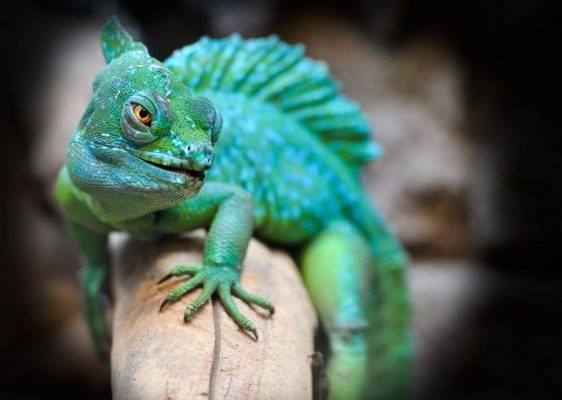 Can Exotic Animals Be Good Pets?