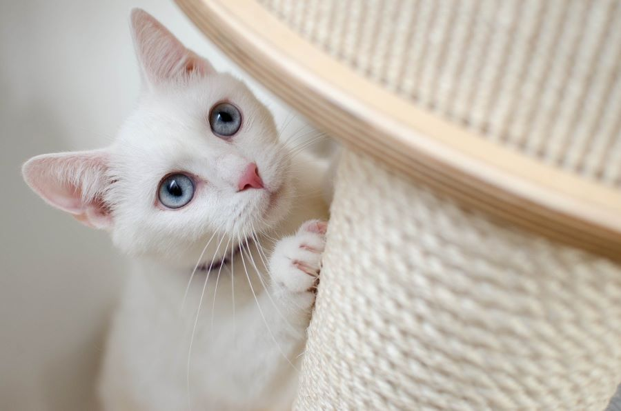 How to Stop Your Cats from Scratching Furniture?