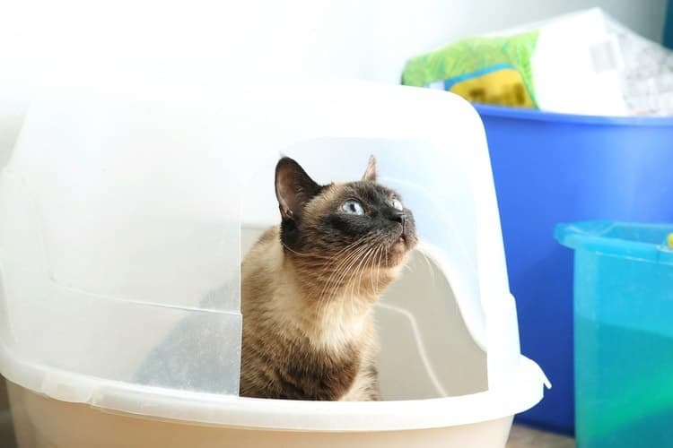 How to Keep Cat's Litter Box Appealing and Clean