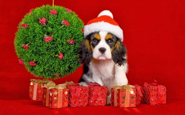 Top 5 Gifts for Your Pup