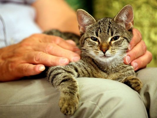 Adopting A Senior Cat: What You Need To Know