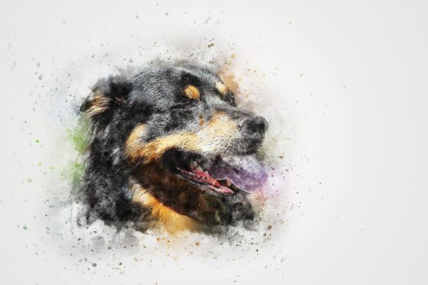 How to Make a Portrait of Your Pet Online