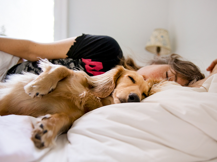 7 Ways How to Treat Insomnia in Your Dog?
