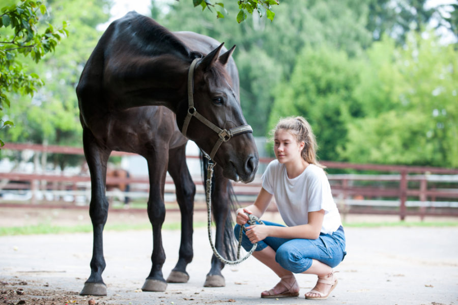 Expert Tips To Strengthen Your Relationship With Your New Horse