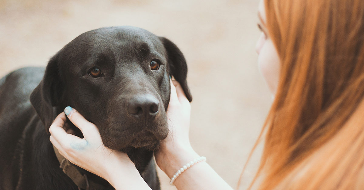 How Pets Can Help With the Loss of a Loved One