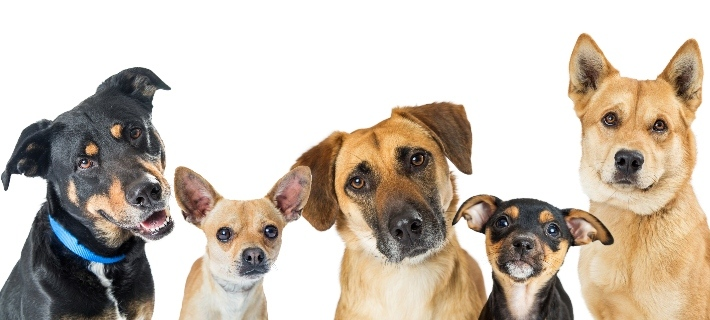 YouYour Partner's Dog Breed Will Tell You About His Personality: Truth or Myth?r Partner's Dog Breed Will Tell You About His Personality: Truth or Myth?