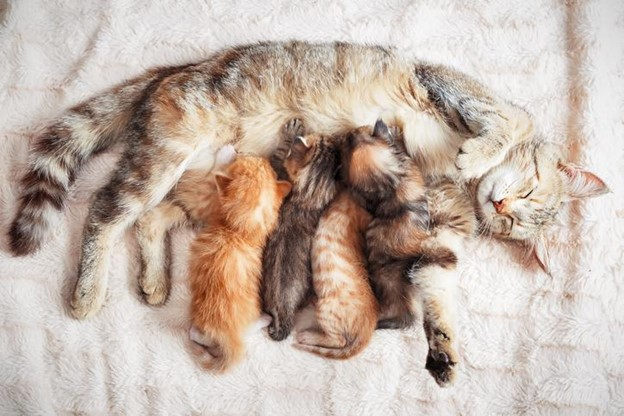 10 Cat Facts You Don't Know (But Should)