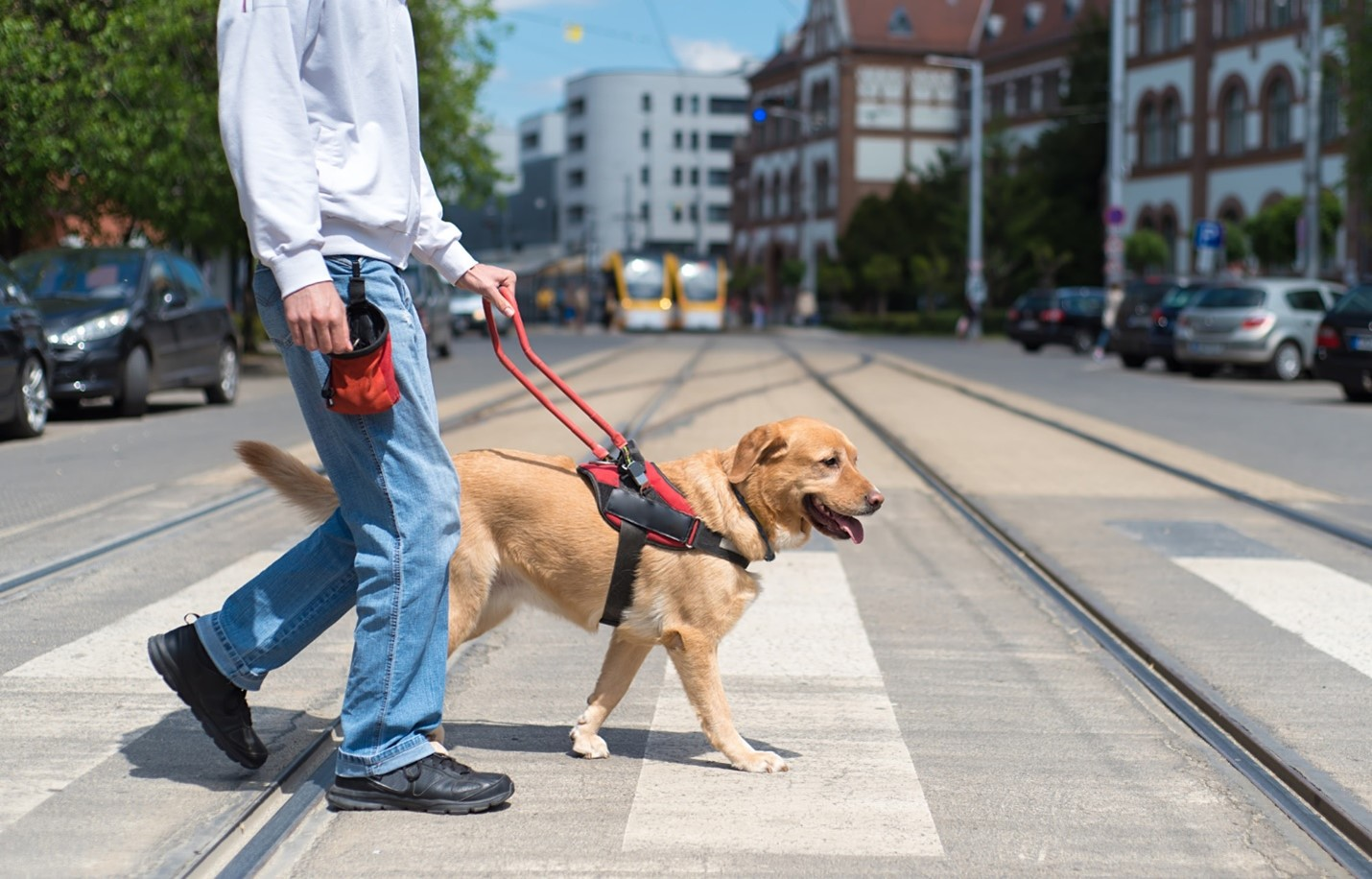 3 Ways an Emotional Support Dog Can Benefit You