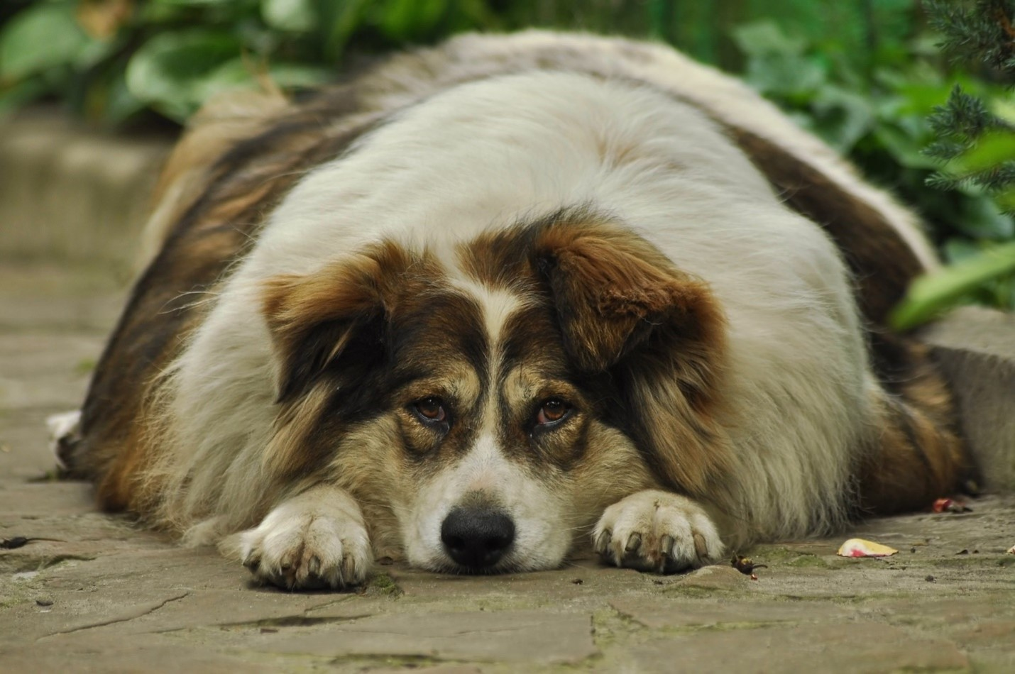 5 Ways to Manage Your Dog's Weight