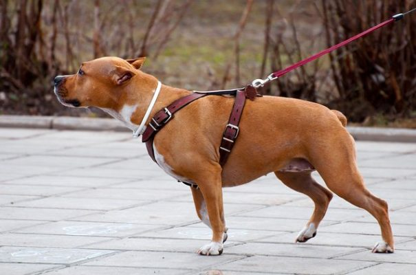 Benefits Of Different Dog Collars