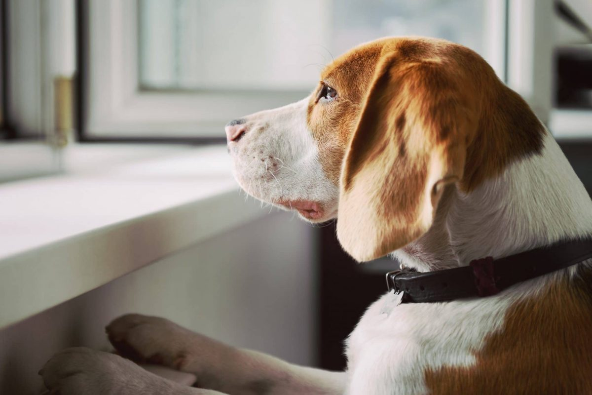 What You Should Know About Treating Your Dog with Anxiety