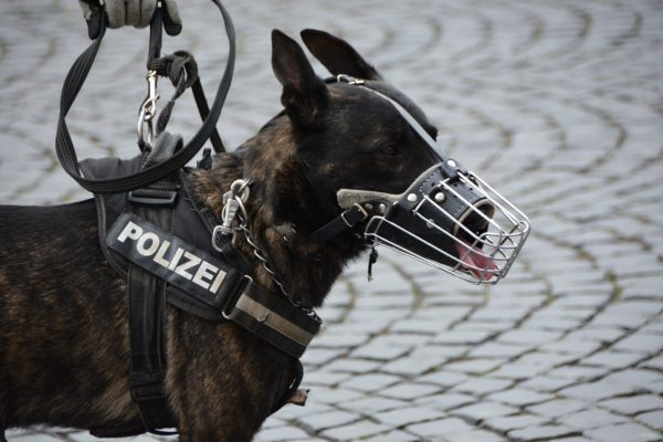 A Fine K-9: 5 Entertaining Facts About Police Dogs