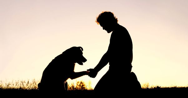 How To Help Someone Cope With Pet Loss?