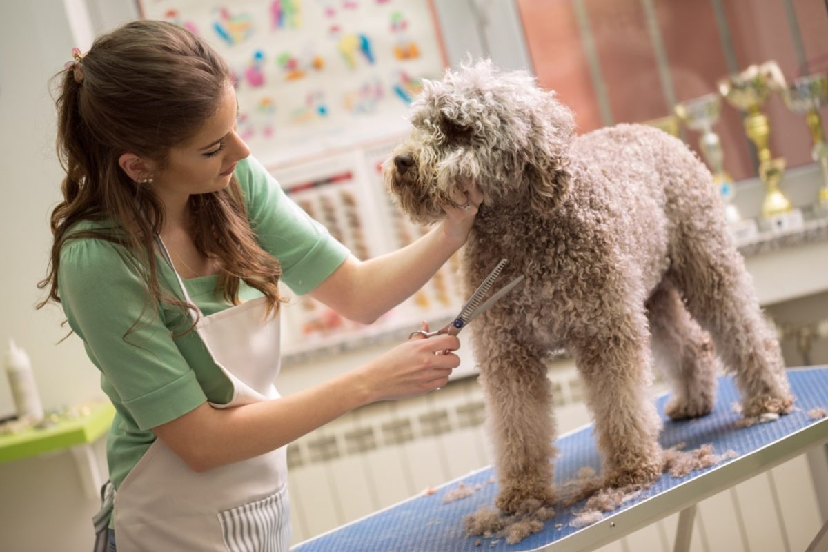 Tips for Grooming Short Haired Dogs