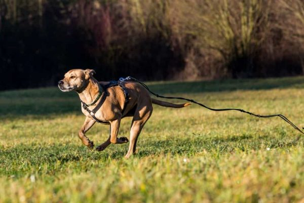 What to Do When Your Dog Runs Away