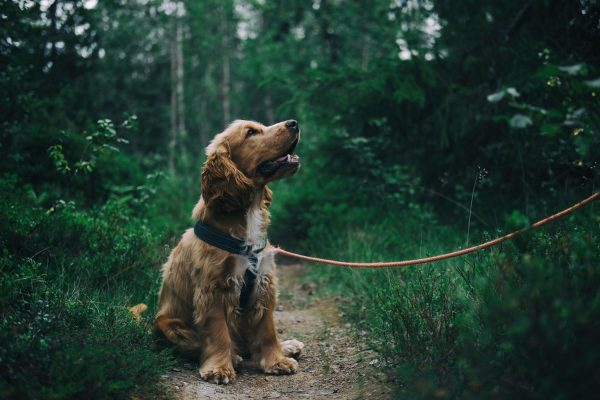 5 Common Reasons Why Your Dog Is Itching and Scratching