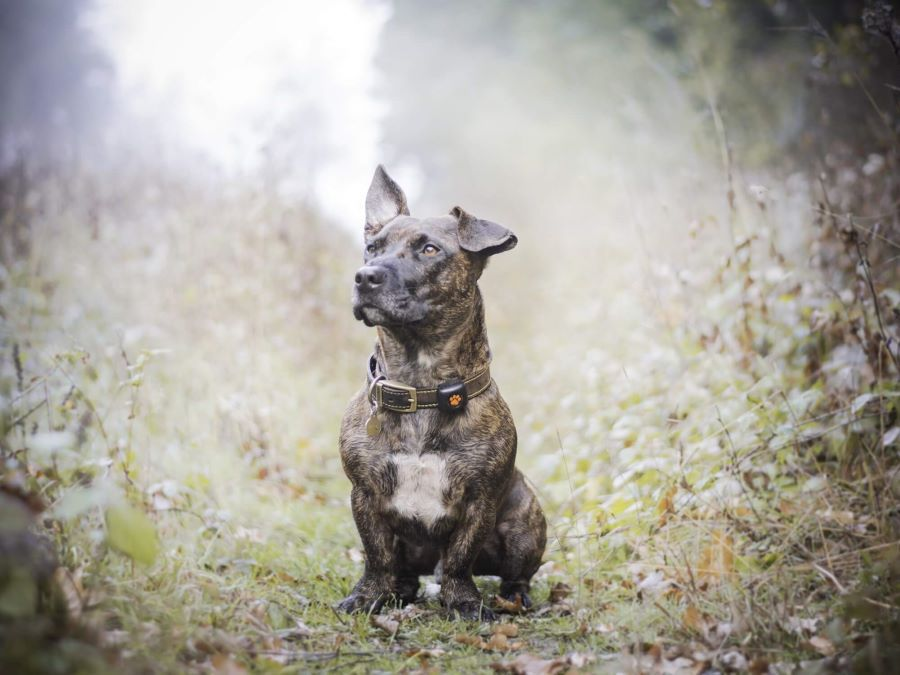 What You Should Know About Mixed Breed Dogs