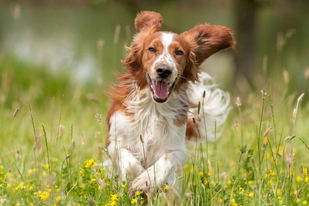 Ten Tips to Keep Your Dog Healthy with Increased Longevity