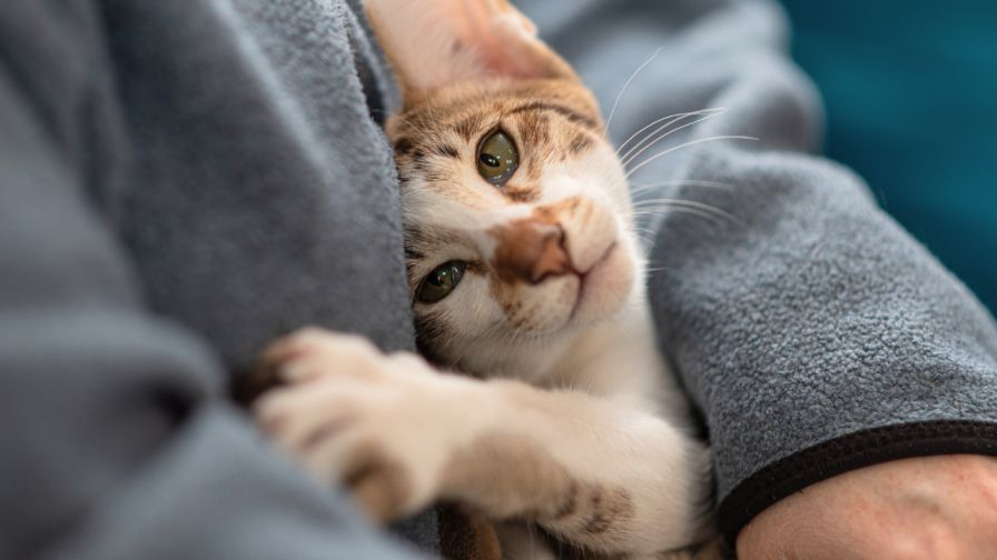 Why is Good Protein Crucial to Your Cat's Diet?
