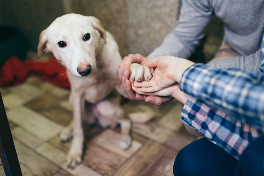 Why adopting a rescue dog helps save lives