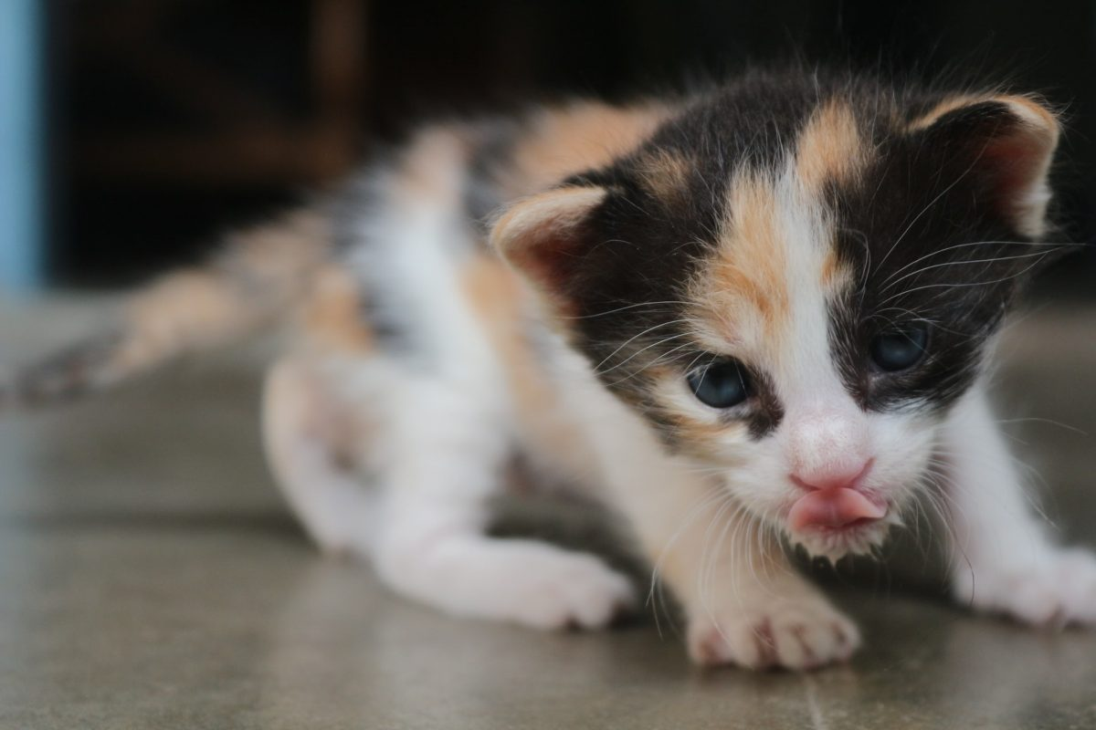 How To Choose The Right Kitten Food