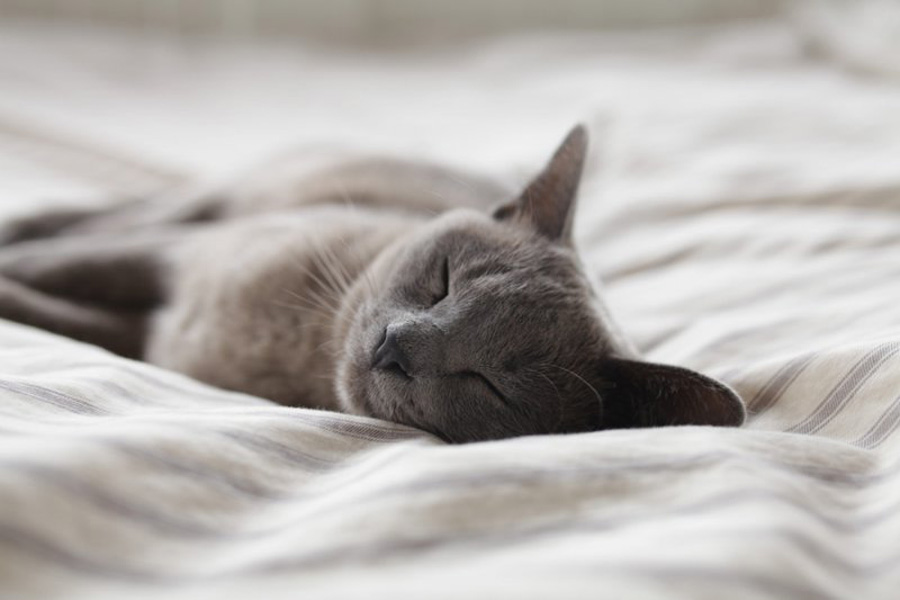 5 Common Health Issues in Cats