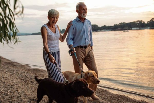 3 Meet-Cute Stories of Canada about Dogs Helping Their Humans Find a Soulmate